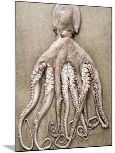 An Entire Octopus-Sarka Babicka-Mounted Photographic Print