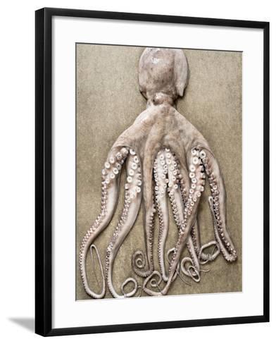 An Entire Octopus-Sarka Babicka-Framed Art Print