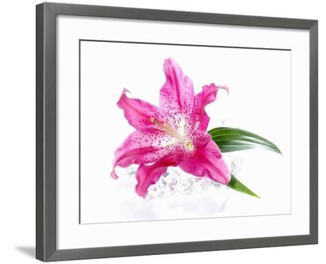 A Pink Lilly--Framed Art Print
