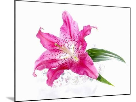 A Pink Lilly--Mounted Photographic Print