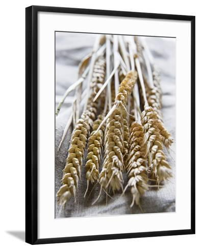 Ears of Rye on a Linen Cloth-Susanne Casper-zielonka-Framed Art Print