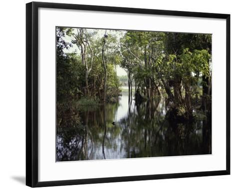 Amazon River, Brazil--Framed Art Print