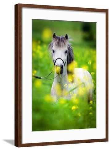 Portrait of Shetland Pony on Green Background.-Alexia Khruscheva-Framed Art Print
