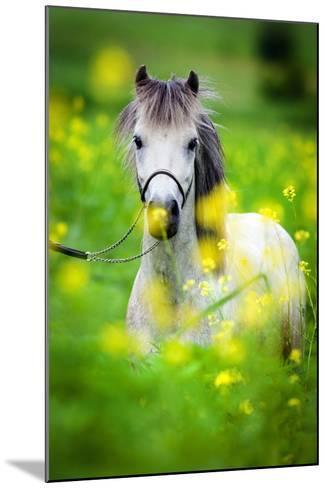 Portrait of Shetland Pony on Green Background.-Alexia Khruscheva-Mounted Photographic Print