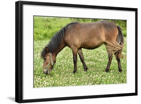 Poney- muro-Framed Art Print