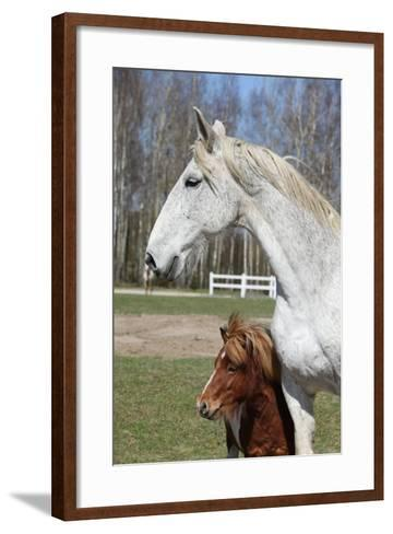 Big Horse with Pony Friend-Zuzule-Framed Art Print