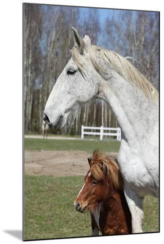 Big Horse with Pony Friend-Zuzule-Mounted Photographic Print