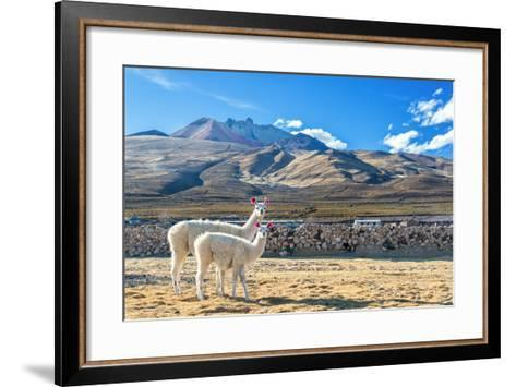 Pair of Llamas-jkraft5-Framed Art Print