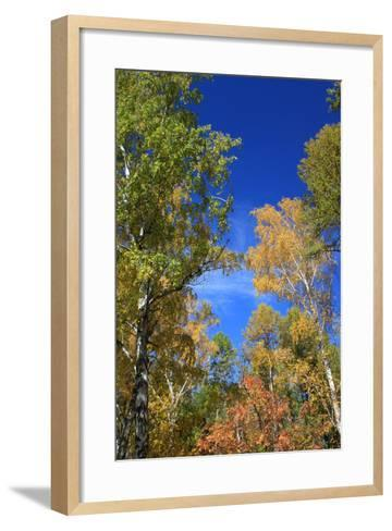 Autumn. Birch Tops against Blue Sky-???????? ??????-Framed Art Print