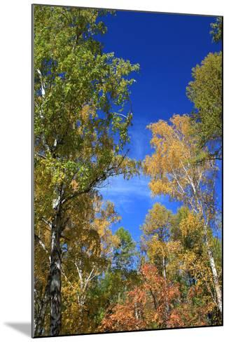 Autumn. Birch Tops against Blue Sky-???????? ??????-Mounted Photographic Print