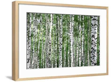 Trunks of Summer Birch Trees-Elena Kovaleva-Framed Art Print