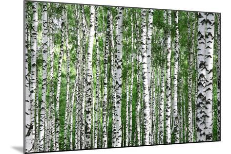 Trunks of Summer Birch Trees-Elena Kovaleva-Mounted Photographic Print