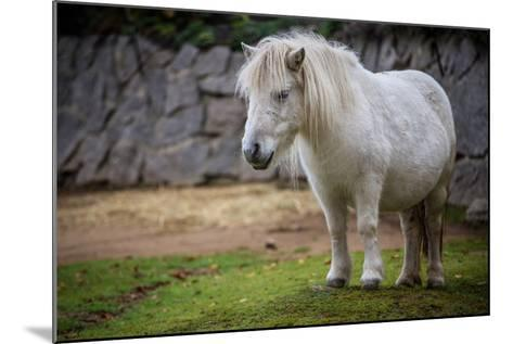 Pony- jurra8-Mounted Photographic Print