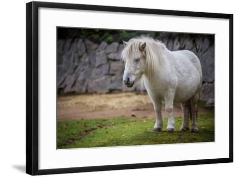 Pony- jurra8-Framed Art Print