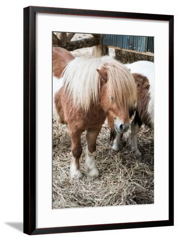 Brown Miniature Horse with Long Hair- crazybboy-Framed Art Print