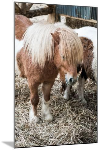 Brown Miniature Horse with Long Hair- crazybboy-Mounted Photographic Print