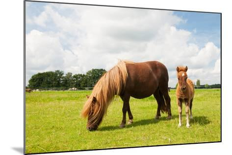Pony and Young Foal in the Meadows-Ivonne Wierink-Mounted Photographic Print
