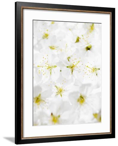 Cherry Blossom-Barbara Lutterbeck-Framed Art Print
