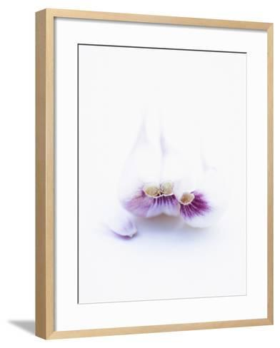Three Unpeeled Cloves of Garlic-Marc O^ Finley-Framed Art Print