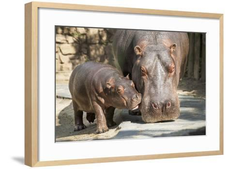 Baby Ippopotamo-Nikokvfrmoto-Framed Art Print