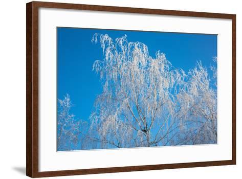 Winter Birch- Atuan-Framed Art Print