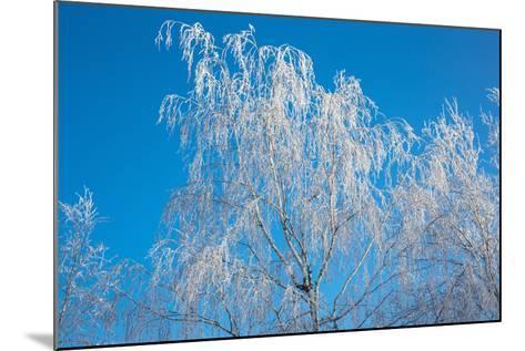 Winter Birch- Atuan-Mounted Photographic Print