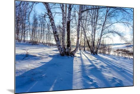 The Snow Covered Birch Forest-06photo-Mounted Photographic Print