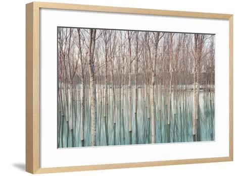 Birches in Flooded Countryside, Natural Pattern-Spumador-Framed Art Print
