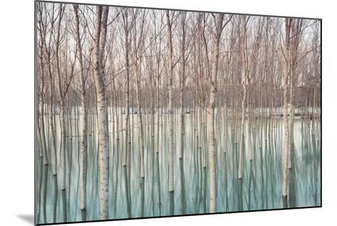 Birches in Flooded Countryside, Natural Pattern-Spumador-Mounted Photographic Print