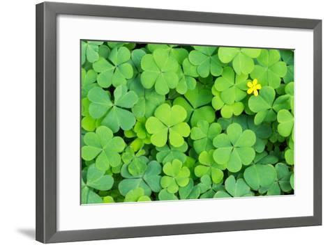 Clover- danielskyphoto-Framed Art Print