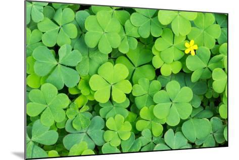 Clover- danielskyphoto-Mounted Photographic Print
