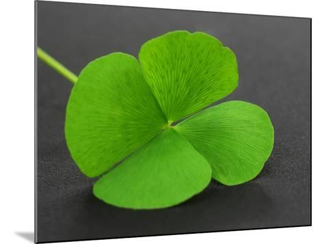 Clover Leaf on Gray Surface- Swapan-Mounted Photographic Print