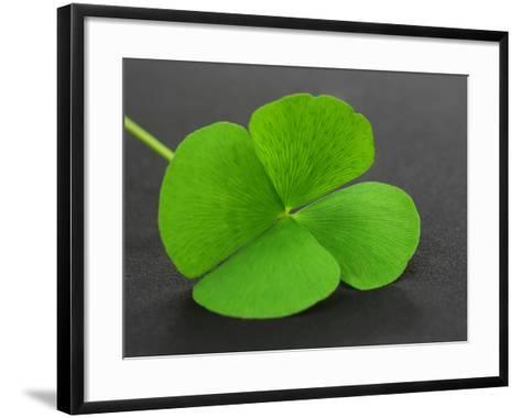 Clover Leaf on Gray Surface- Swapan-Framed Art Print