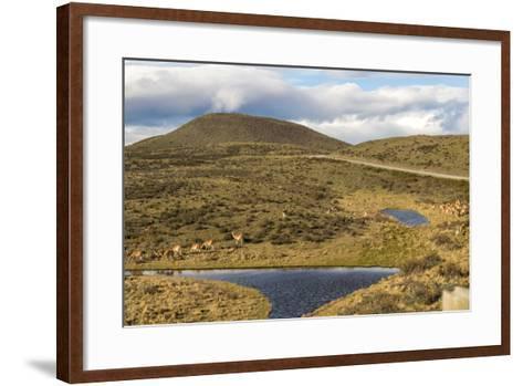 Llamas Grazing - Torres Del Paine Chile- robertprice87-Framed Art Print