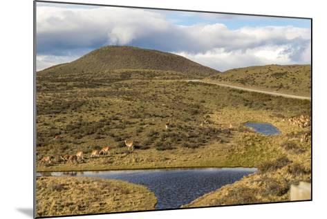 Llamas Grazing - Torres Del Paine Chile- robertprice87-Mounted Photographic Print