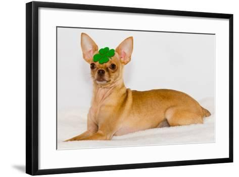 Chihuahua with Clover on Head.- photorebelle-Framed Art Print
