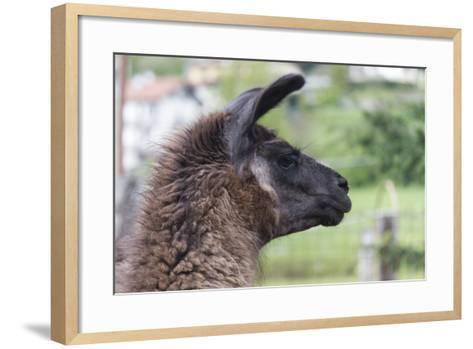 Lamas in the Farm-spetenfia-Framed Art Print