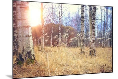 Spring Birch Forest- kichigin19-Mounted Photographic Print