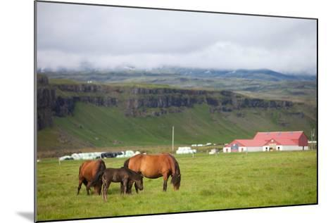 Icelandic Horse- deserttrends-Mounted Photographic Print