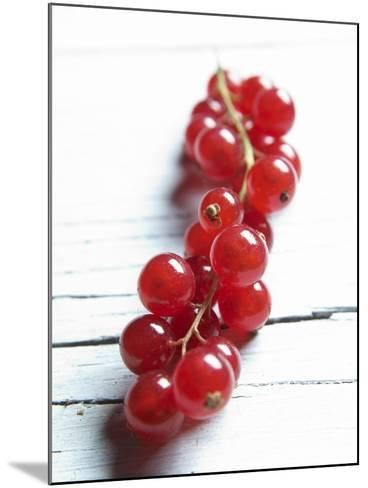 A Bunch of Redcurrants-Brigitte Wegner-Mounted Photographic Print
