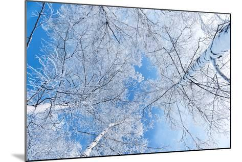 Tops of Trees against the Sky-Alexandr Vasilyev-Mounted Photographic Print