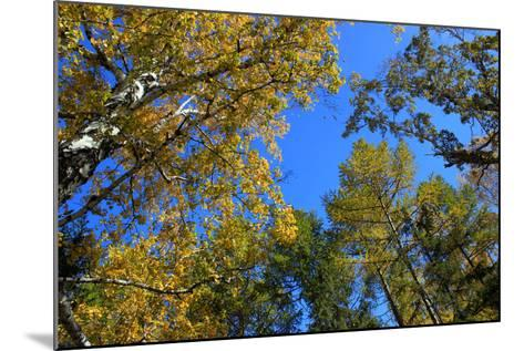 Autumn. Gold Birch and Larch Tops against Blue Sky-???????? ??????-Mounted Photographic Print
