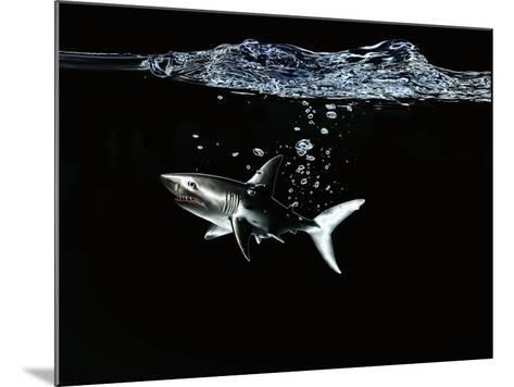 A Shark under Water-Hermann Mock-Mounted Photographic Print