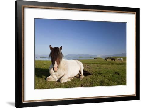 Icelandic Horse at Rest in A Field-Darren Baker-Framed Art Print