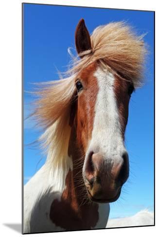 Horse Head in Iceland-TTstudio-Mounted Photographic Print