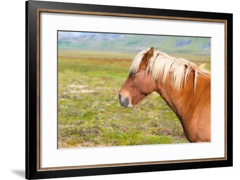 Icelandic Horse-Natalia Pushchina-Framed Art Print