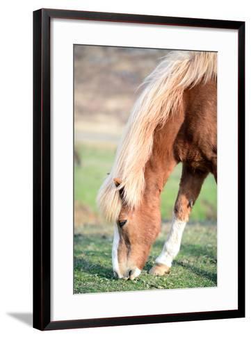 Icelandic Horse Grazing-Aleksandar Mijatovic-Framed Art Print