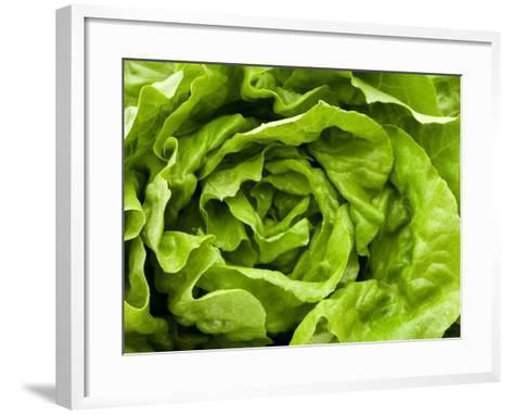 Fresh Lettuce-Greg Elms-Framed Art Print