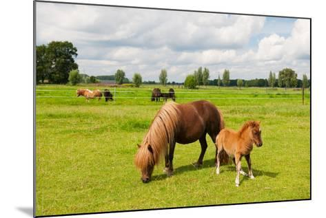 Pony in the Meadows-Ivonne Wierink-Mounted Photographic Print