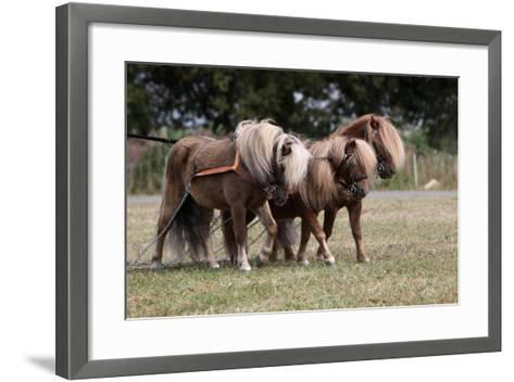 Shetlandponies-Gespann-Martina Berg-Framed Art Print